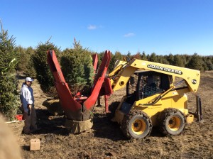 Side angle of a tree getting planted into the nursery